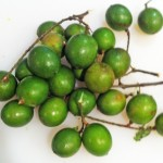 Quenepas AKA Spanish Lime